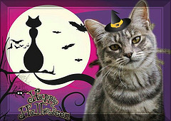 Image: 'Happy Halloween to all Friends !'  http://www.flickr.com/photos/30054343@N07/6281198069 Found on flickrcc.net